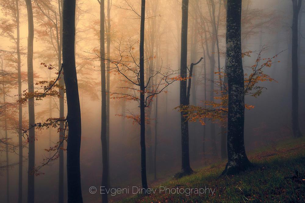 Ранна есен в гората