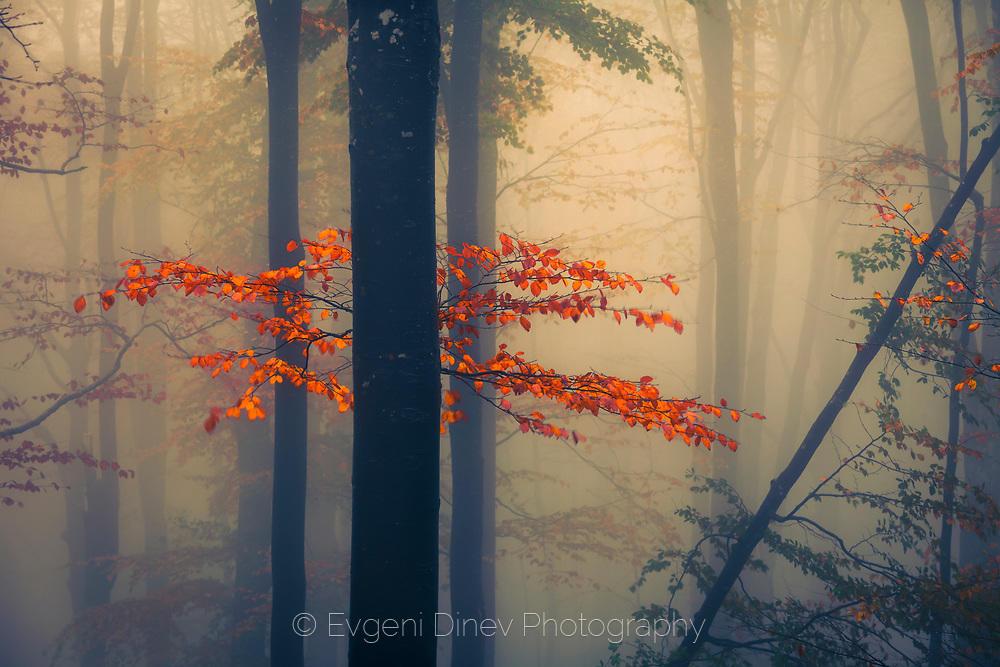 Съвършена есенна гора