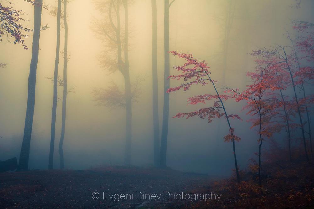 Нежно есенно дръвче