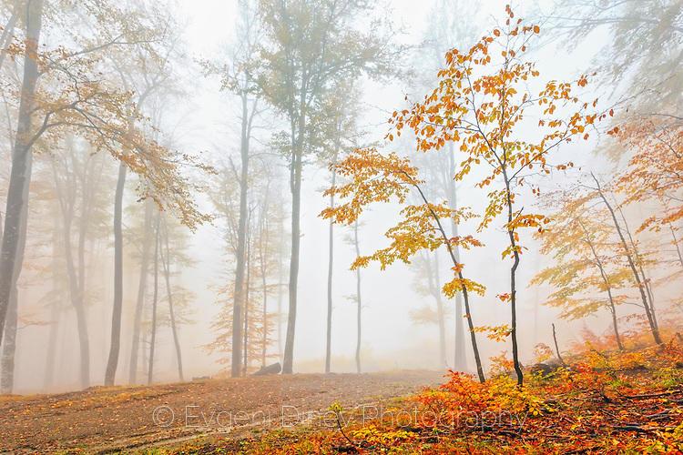 Оранжева гора в мъгла
