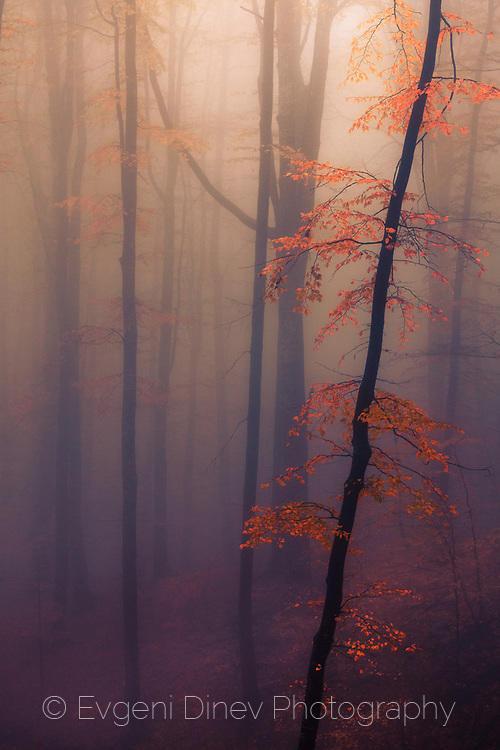 Жълто дръвче на червен фон