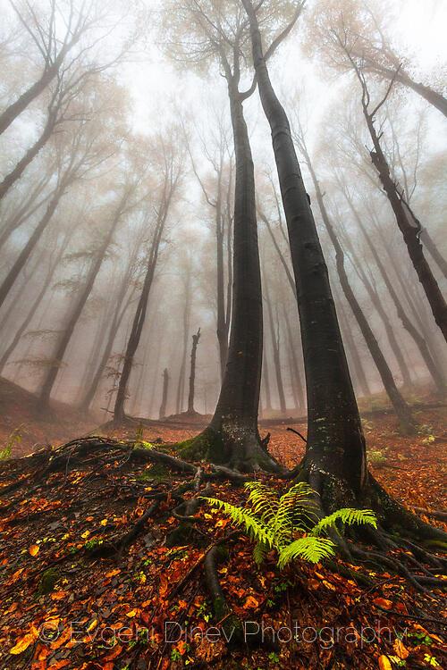 Властелините на гората