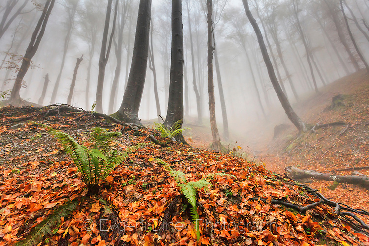 Господари на гората