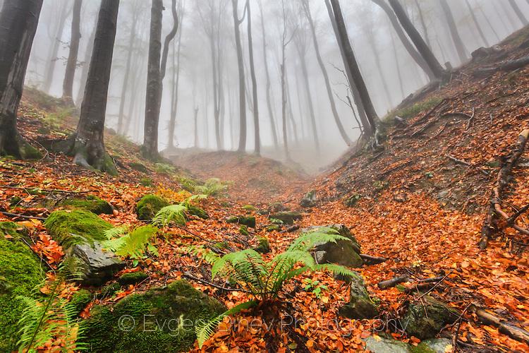 Есенни исполини