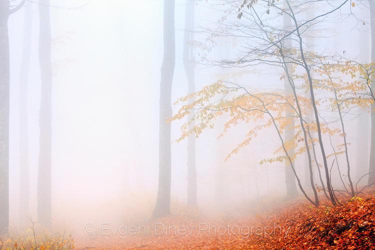 Гора изгубена в мъгла