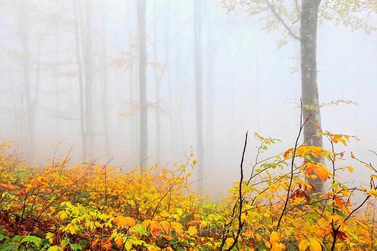 Тучна есенна палитра