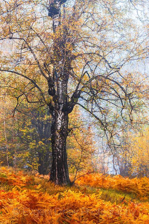 Изтънчена есенна картина