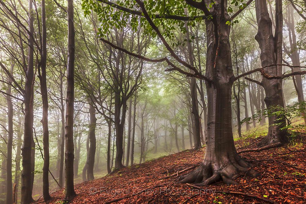 Етрополска гора