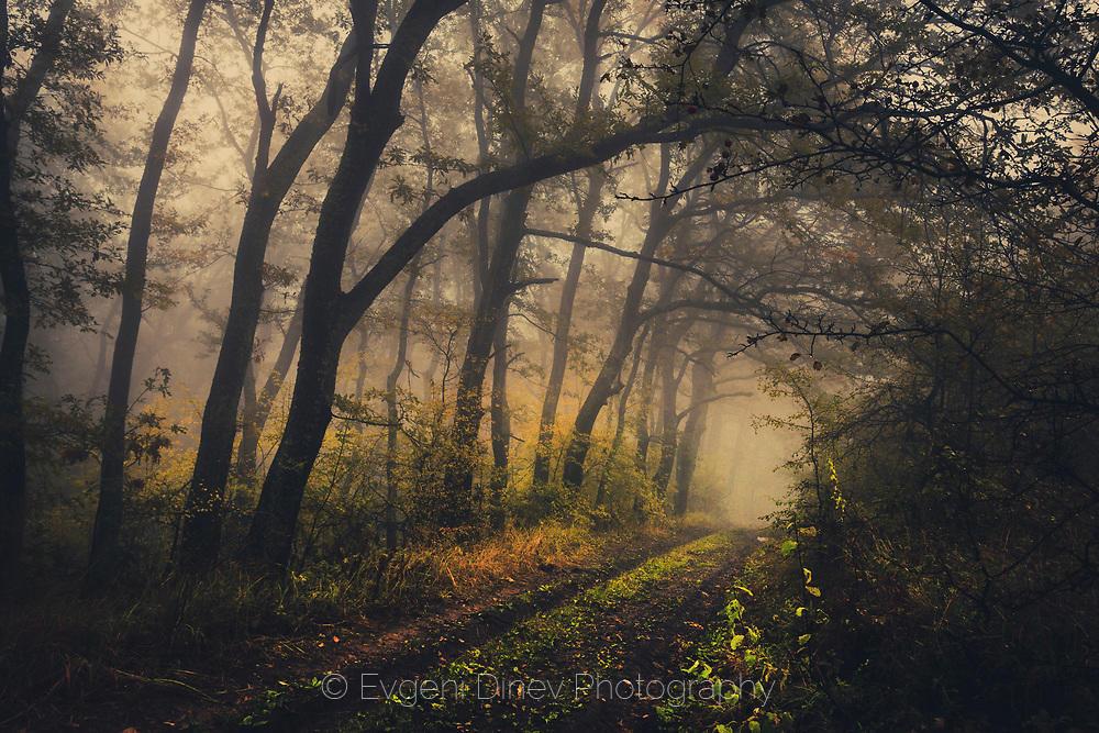 Мрачна гора