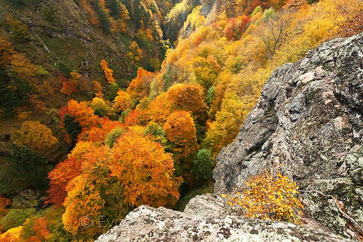 Пъстра есен в резерват Стенето