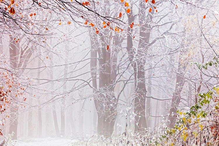 Заскрежена есенна мъглива гора