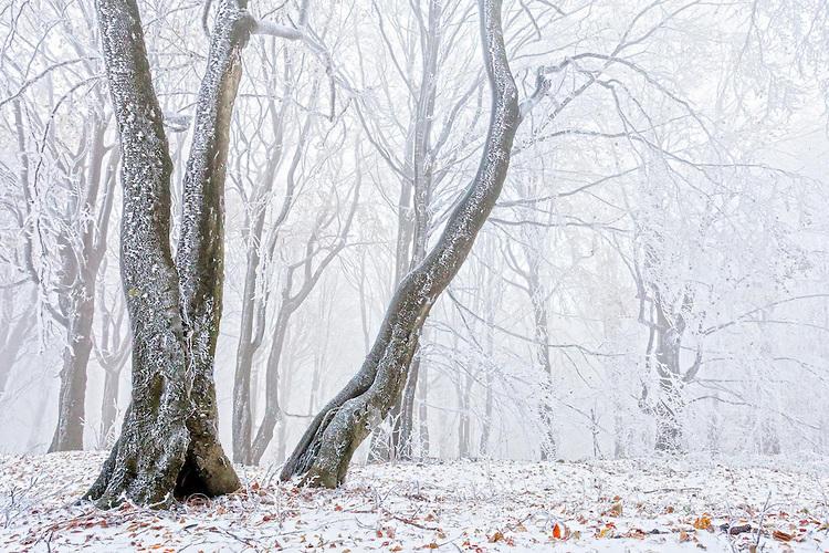 Измръзнала гора