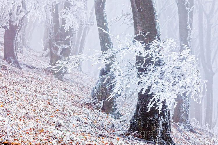 Бяла есенна гора в мъгла