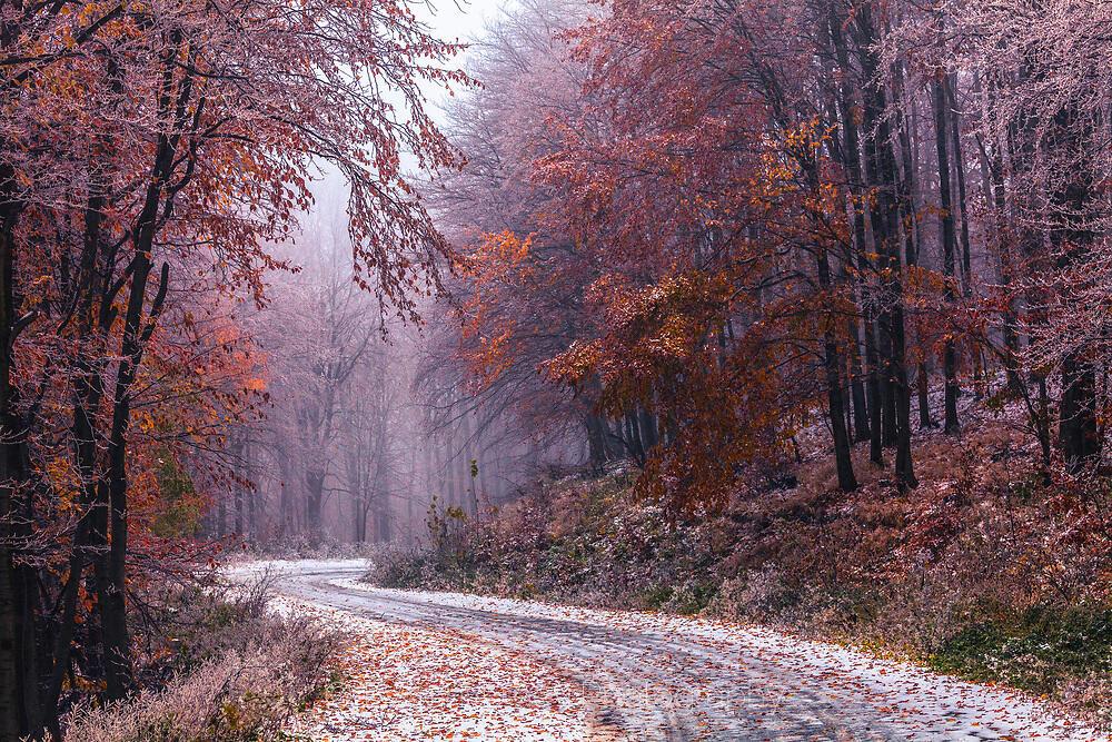 Заледен път в есенна гора и мъгла
