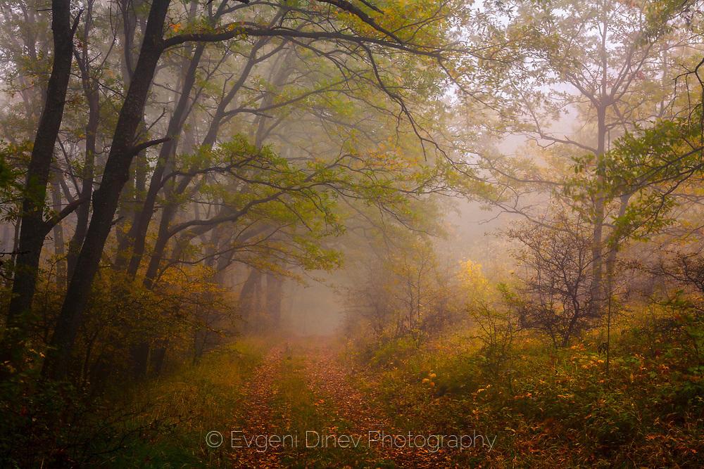 Път в мъглата