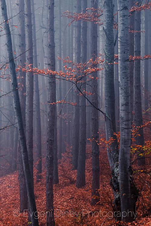 Есенна оранжева гора