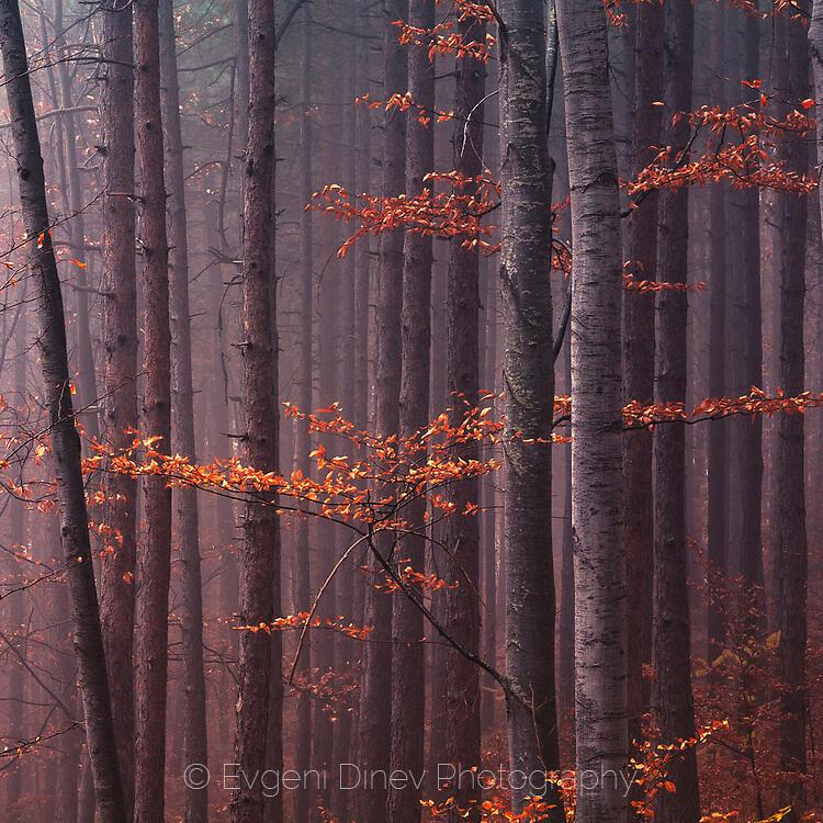 Червени листа в гората