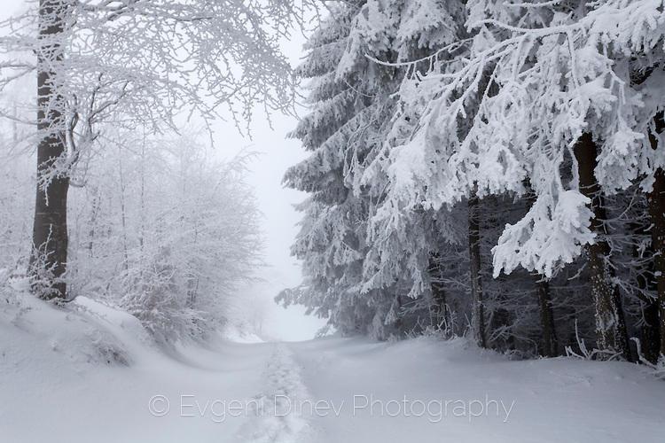 В снежните гори на парк Българка