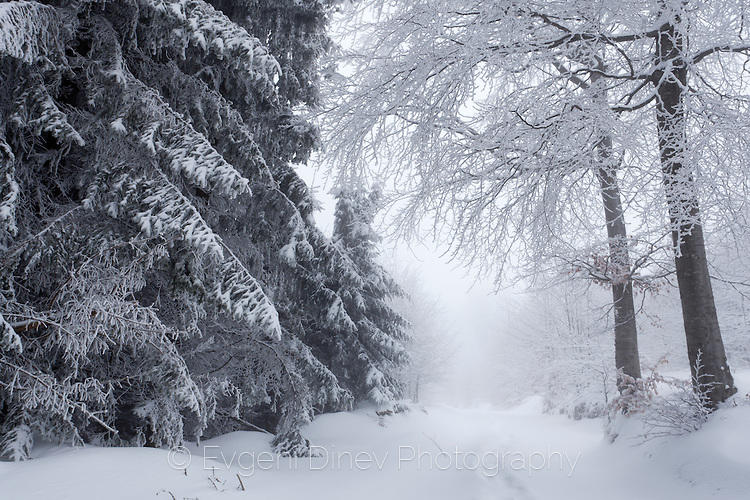 Пъртина в снежната гора