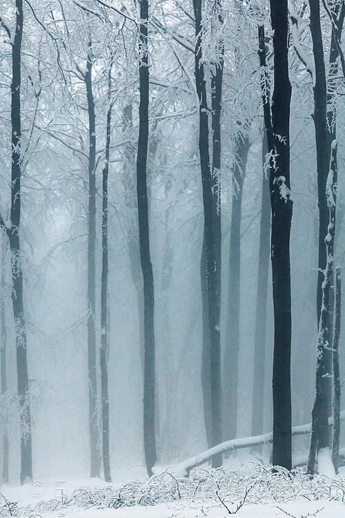 Снежна белота