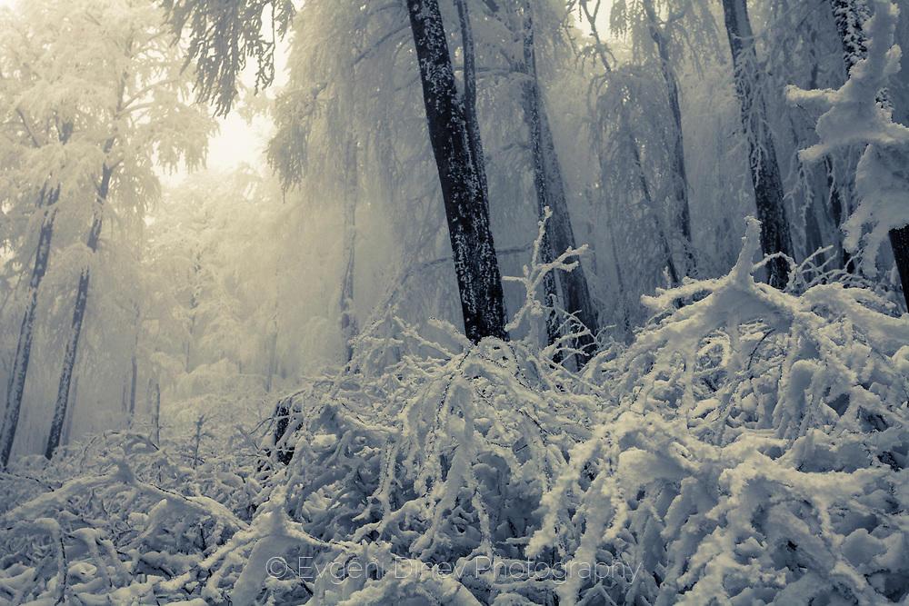 Бяла гора