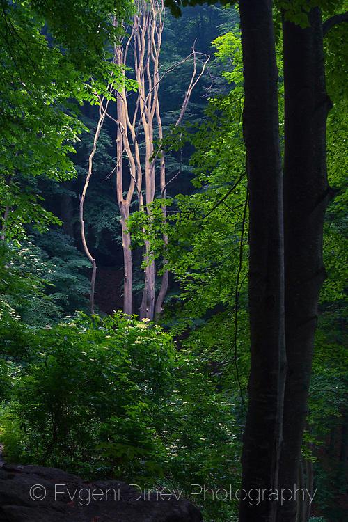 Светлина в тъмната гора