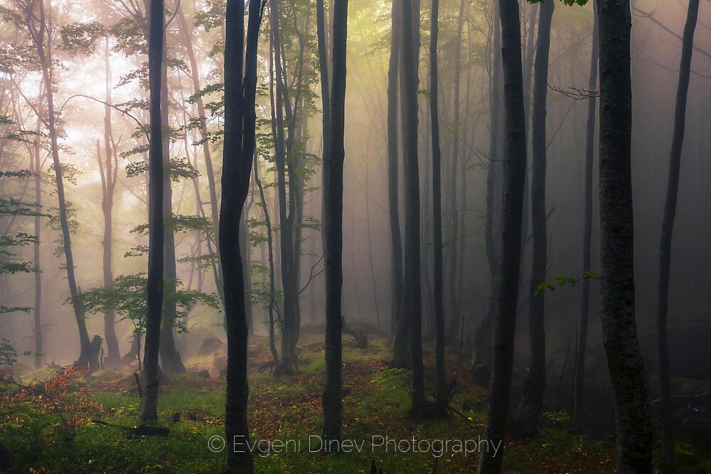 Дървета в мъглата