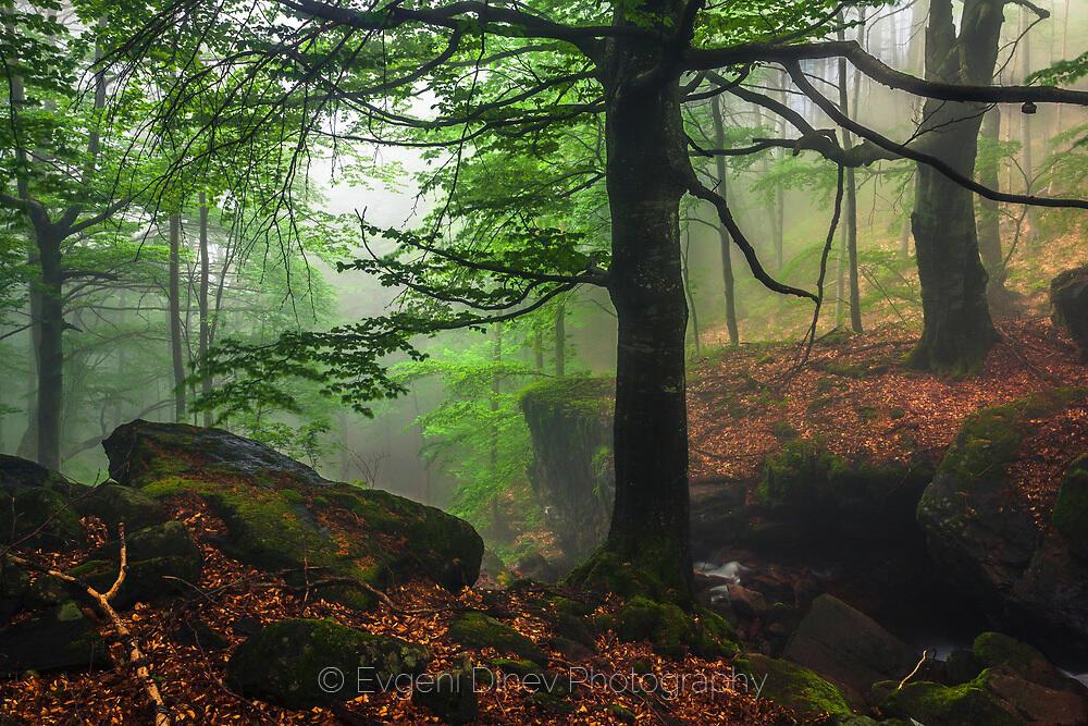 Тъмна гора