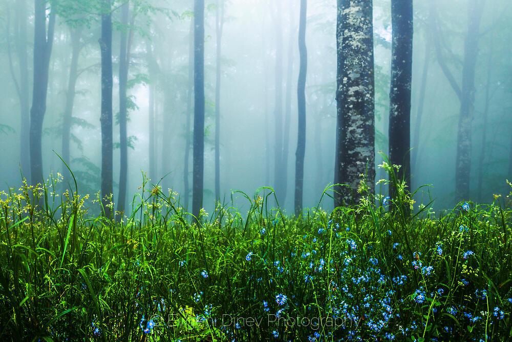Пролетна свежест в мъгливата гора