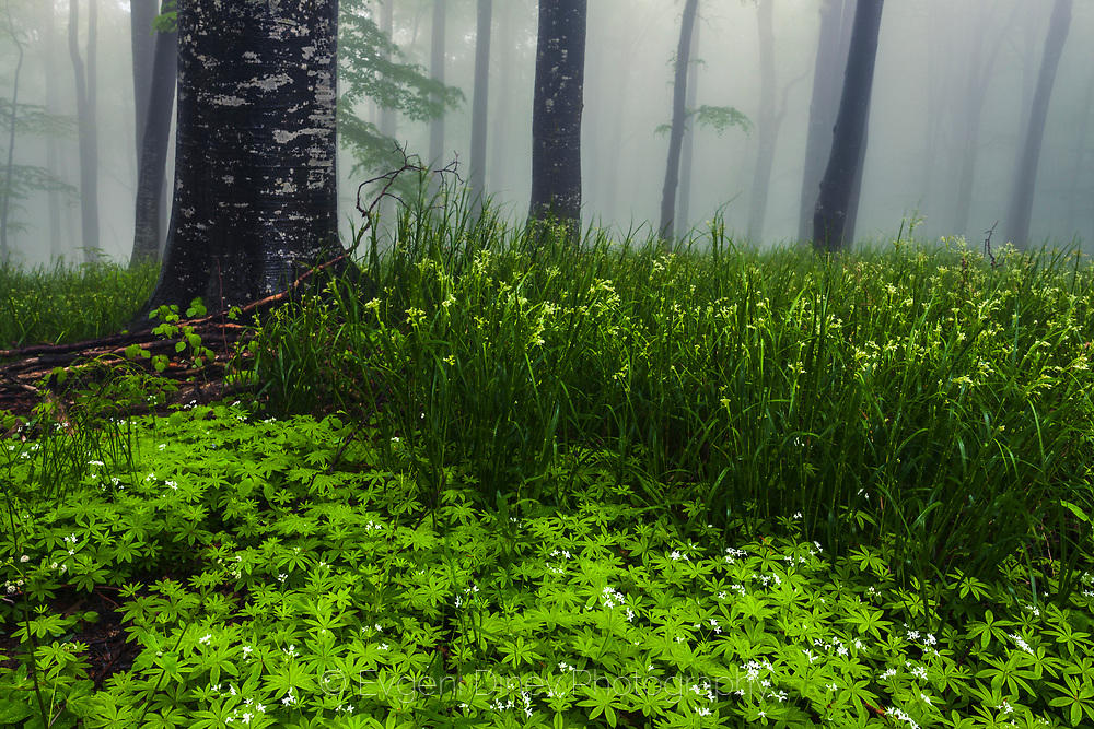 Пролетната гора на Беклемето