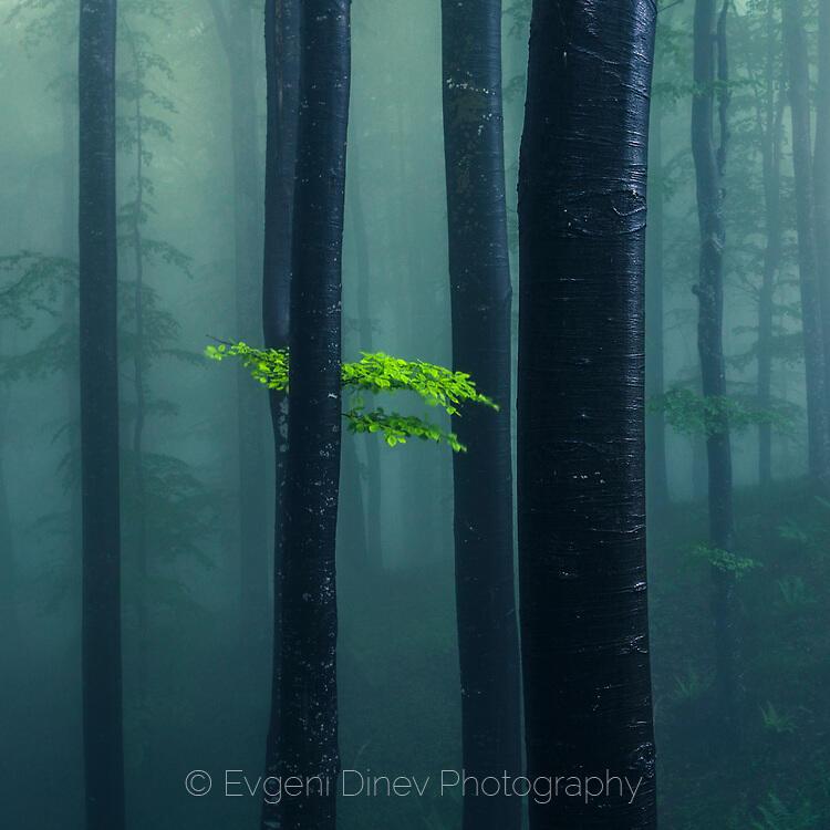 Зелени листа в мъглата