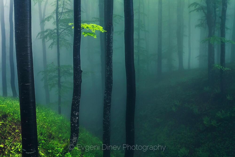 Зелена мъгла
