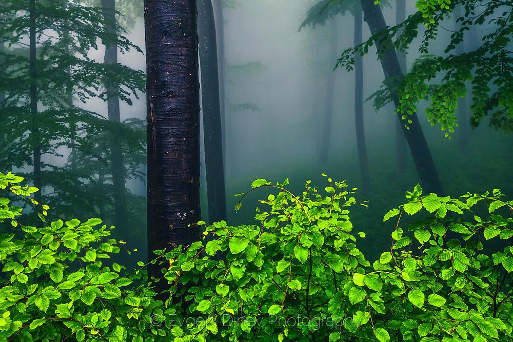 Пред входа на мъгливата гора