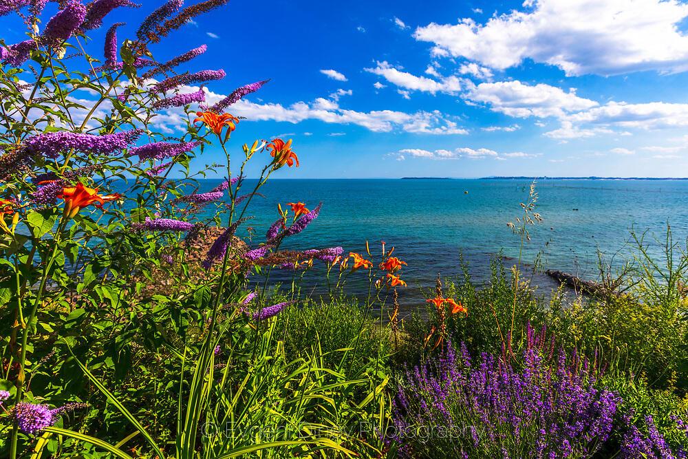 Цветни храсти по крайбрежието на Свети Влас