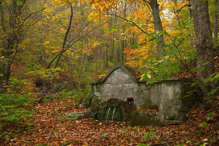 Чешма в гората