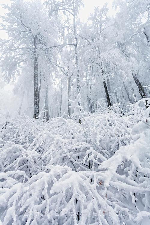 Снежно-бяла гора