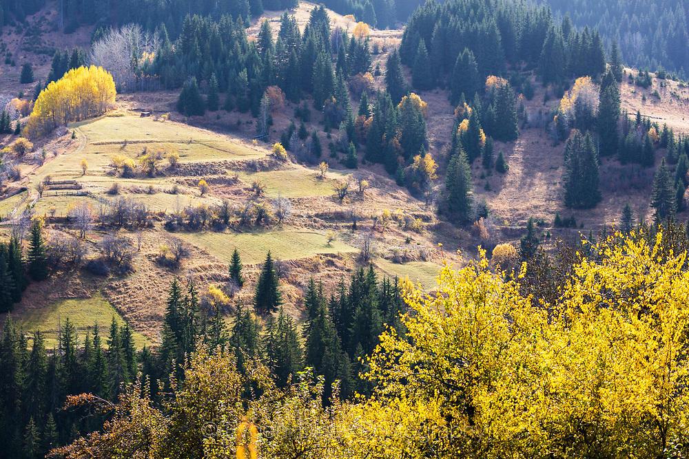 Цветни есенни поляни