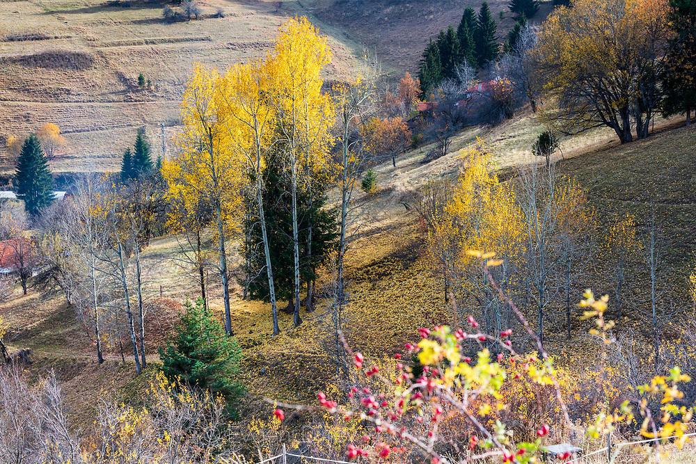 Есен край село Гела