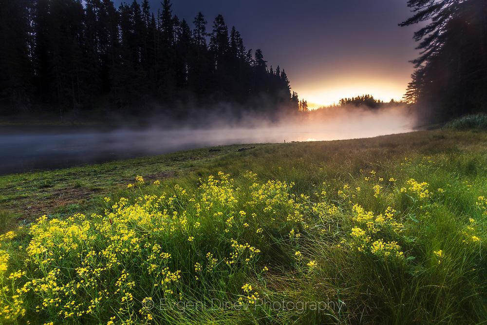 Жълти цветя край езеро