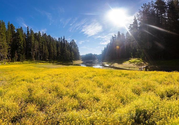 Жълта поляна край Голям Беглик