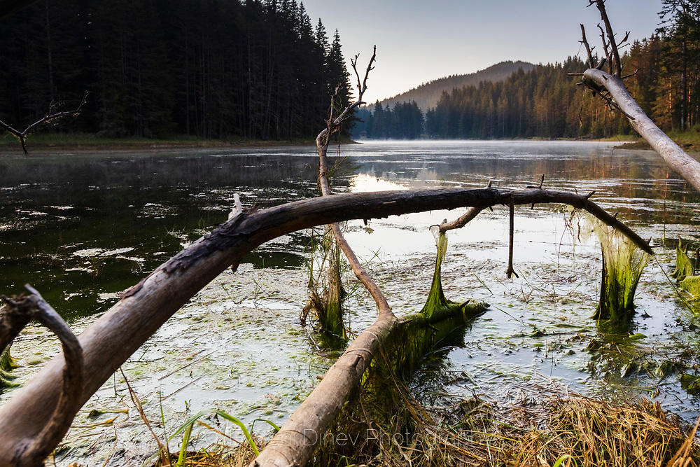 Клони с мъх в езеро