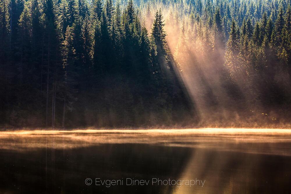Слънчеви лъчи пронизват гората и потъват в кристални езерни води