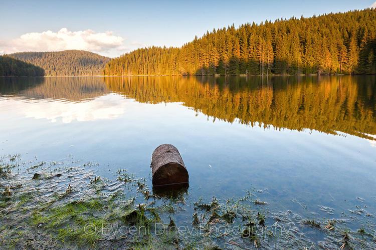 Златна гора край езерото
