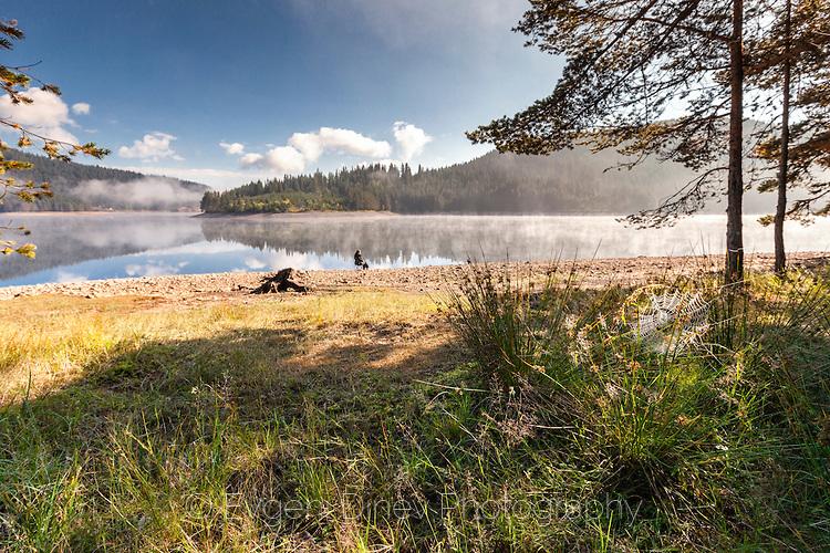 Мокра паяжина край езерото