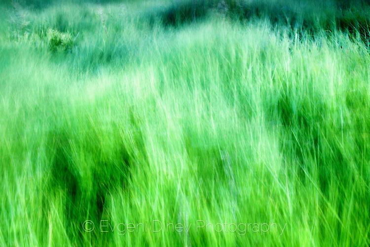 Танцуваща трева