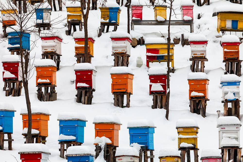 Цветни кошери отрупани в сняг