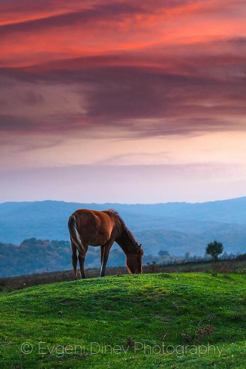 Конят и залеза