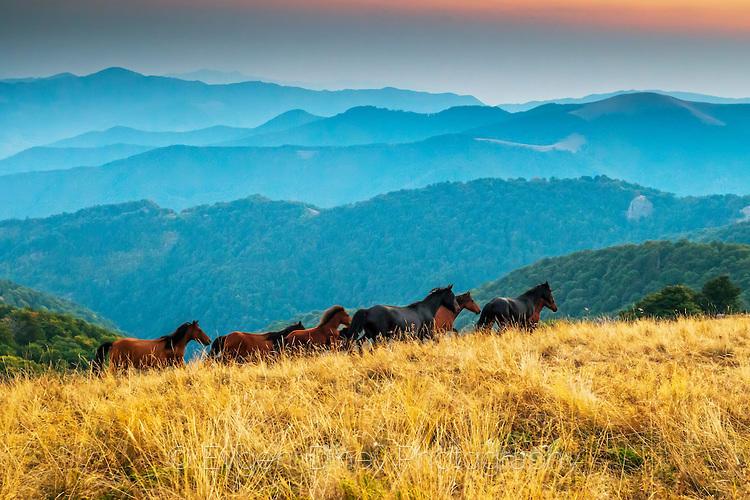 Диви коне в резерват Стенето