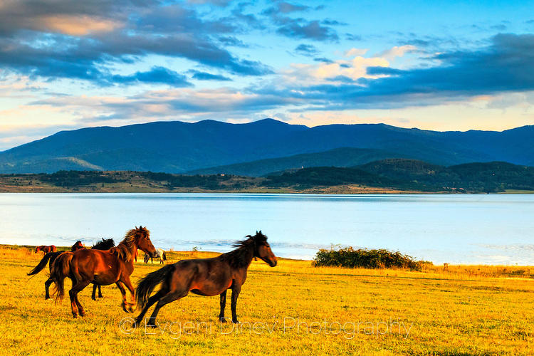 Бягащи коне край езеро по залез