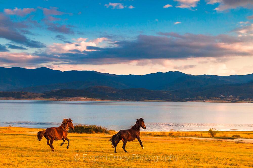 Волни коне